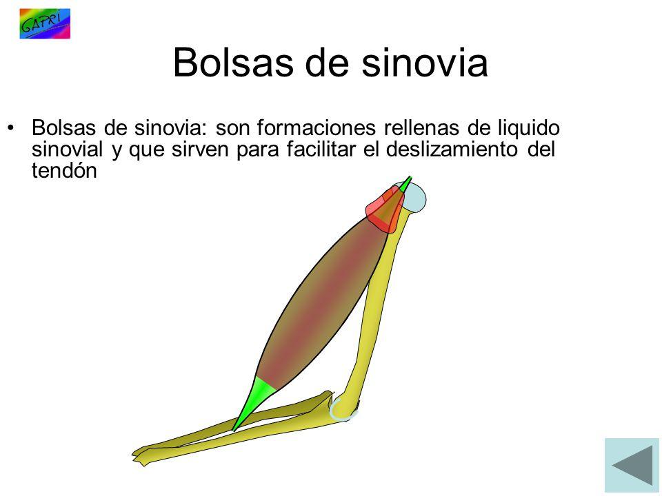 Bolsas de sinovia Bolsas de sinovia: son formaciones rellenas de liquido sinovial y que sirven para facilitar el deslizamiento del tendón.