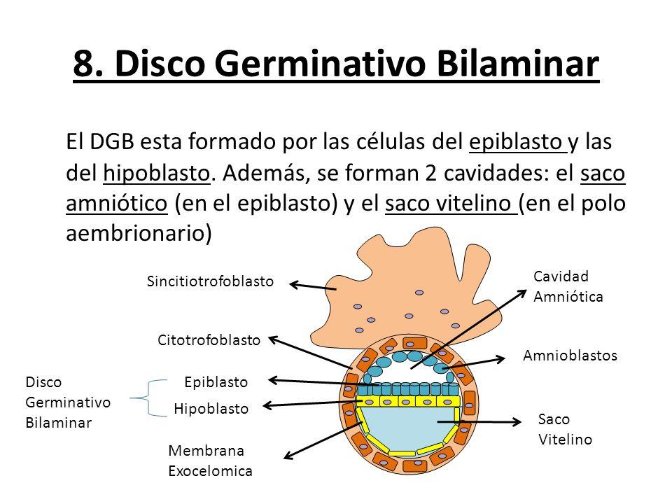 8. Disco Germinativo Bilaminar