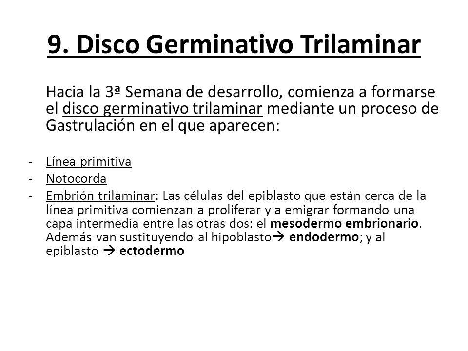 9. Disco Germinativo Trilaminar