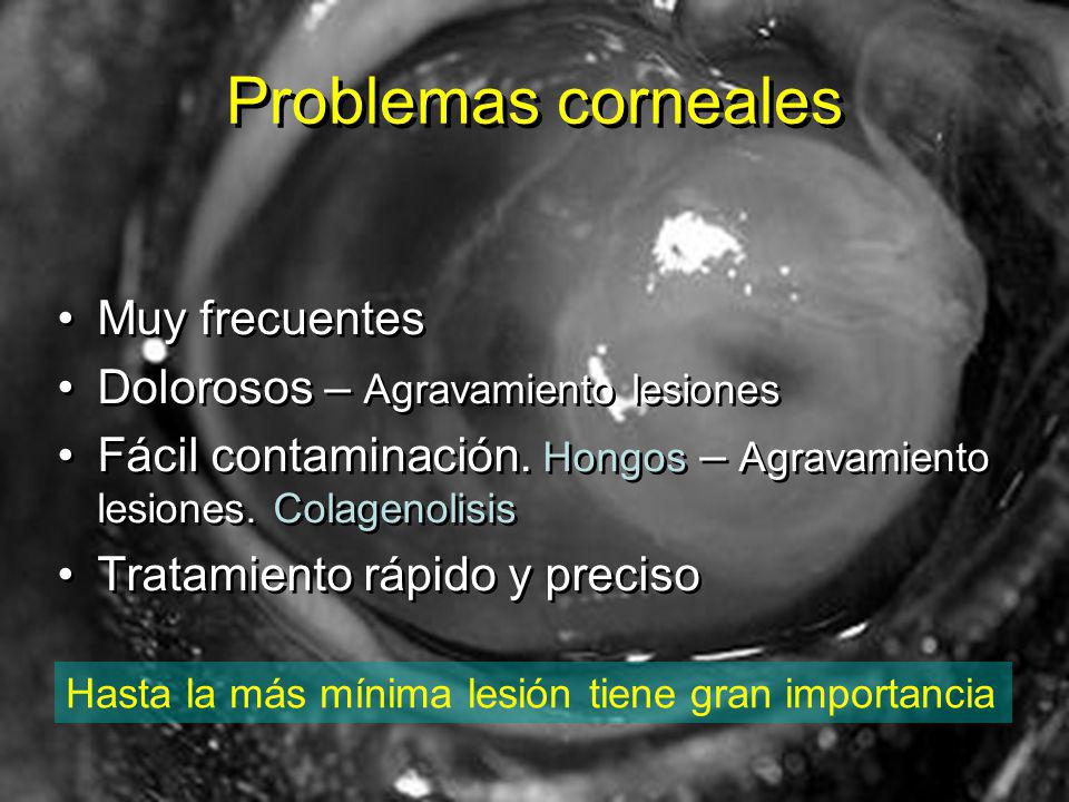 Problemas corneales Muy frecuentes Dolorosos – Agravamiento lesiones