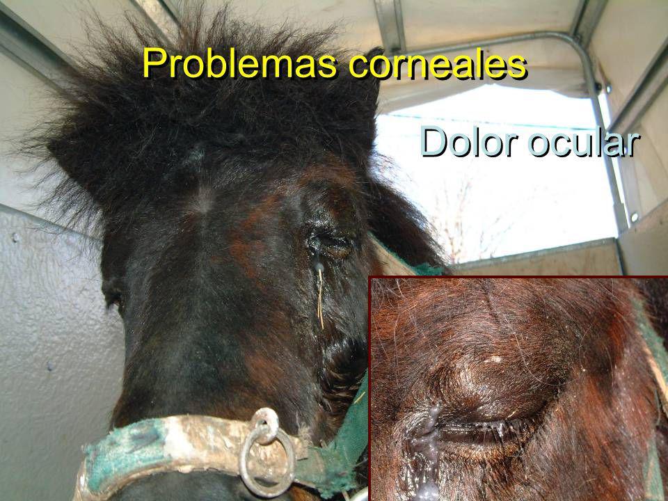 Problemas corneales Dolor ocular