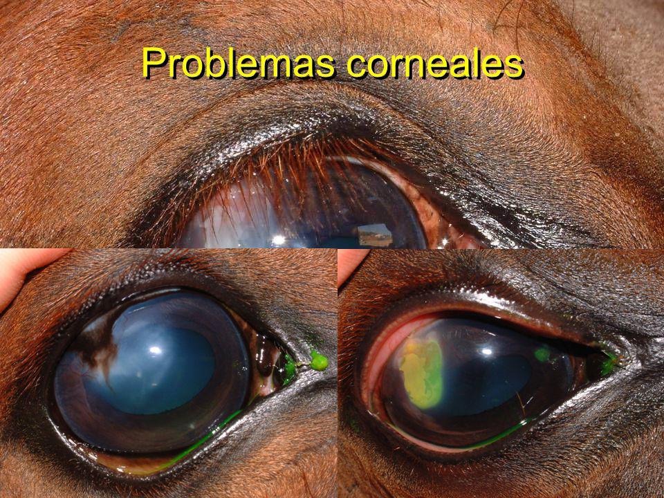 Problemas corneales