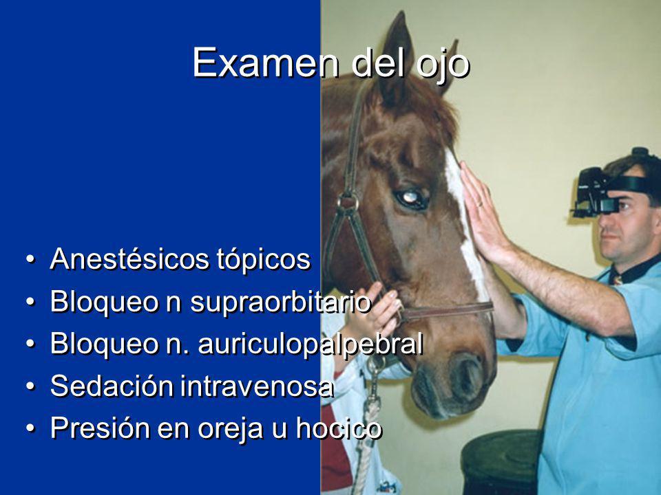 Examen del ojo Anestésicos tópicos Bloqueo n supraorbitario