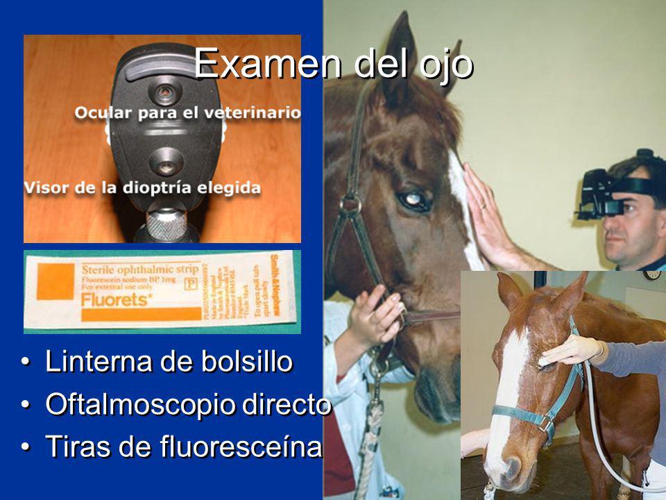 Examen del ojo Linterna de bolsillo Oftalmoscopio directo