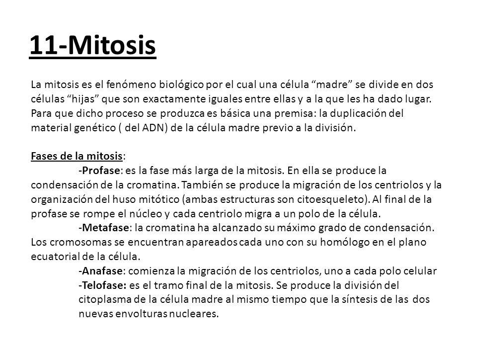 11-Mitosis