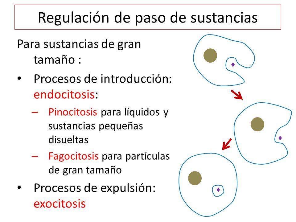 Regulación de paso de sustancias