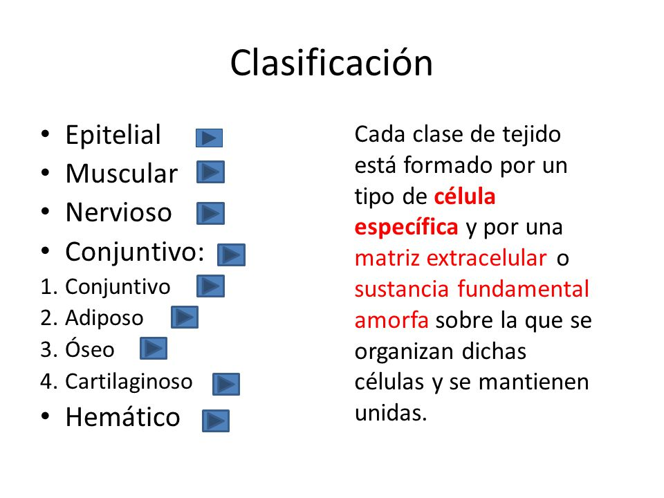 Clasificación Epitelial Muscular Nervioso Conjuntivo: Hemático