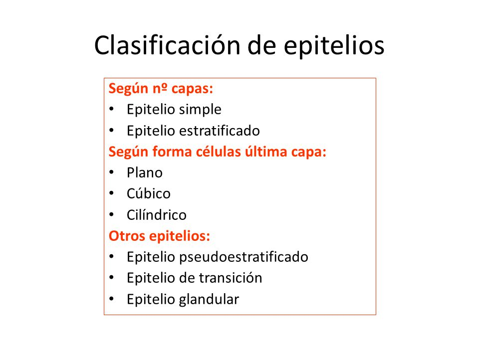 Clasificación de epitelios