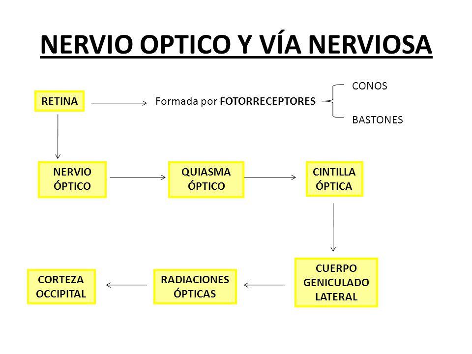 NERVIO OPTICO Y VÍA NERVIOSA