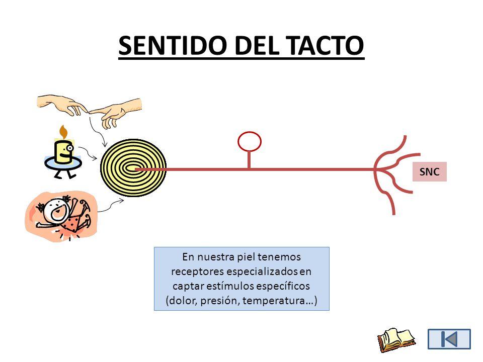 SENTIDO DEL TACTO SNC.