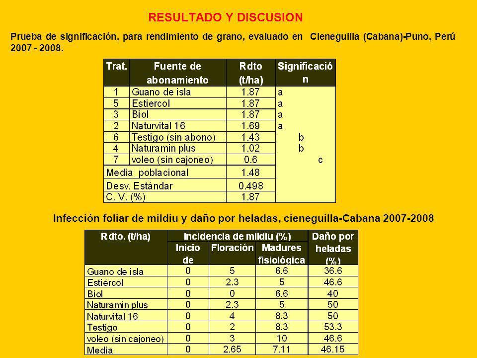 RESULTADO Y DISCUSION Prueba de significación, para rendimiento de grano, evaluado en Cieneguilla (Cabana)-Puno, Perú 2007 - 2008.