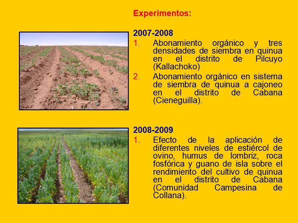 Experimentos: 2007-2008. Abonamiento orgánico y tres densidades de siembra en quinua en el distrito de Pilcuyo (Kallachoko)