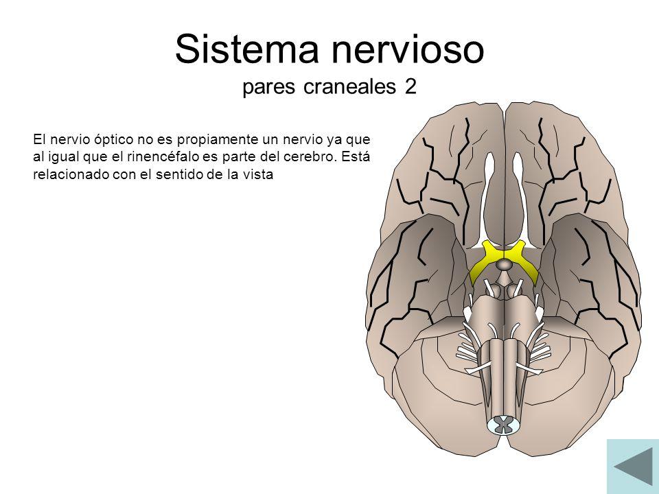 Sistema nervioso pares craneales 2