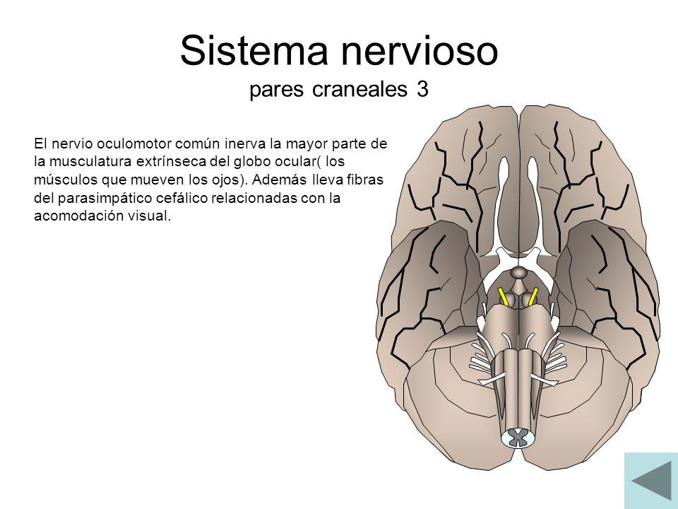 Sistema nervioso pares craneales 3