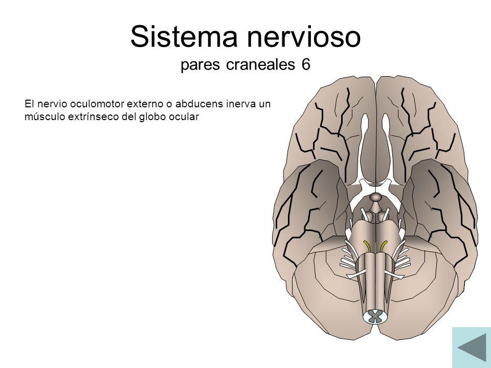 Sistema nervioso pares craneales 6