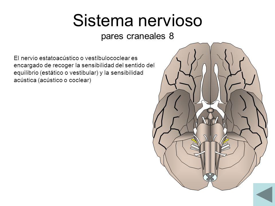 Sistema nervioso pares craneales 8