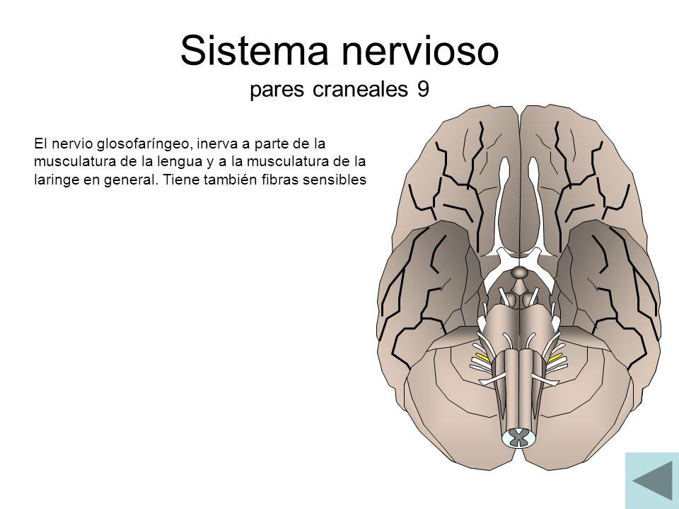 Sistema nervioso pares craneales 9