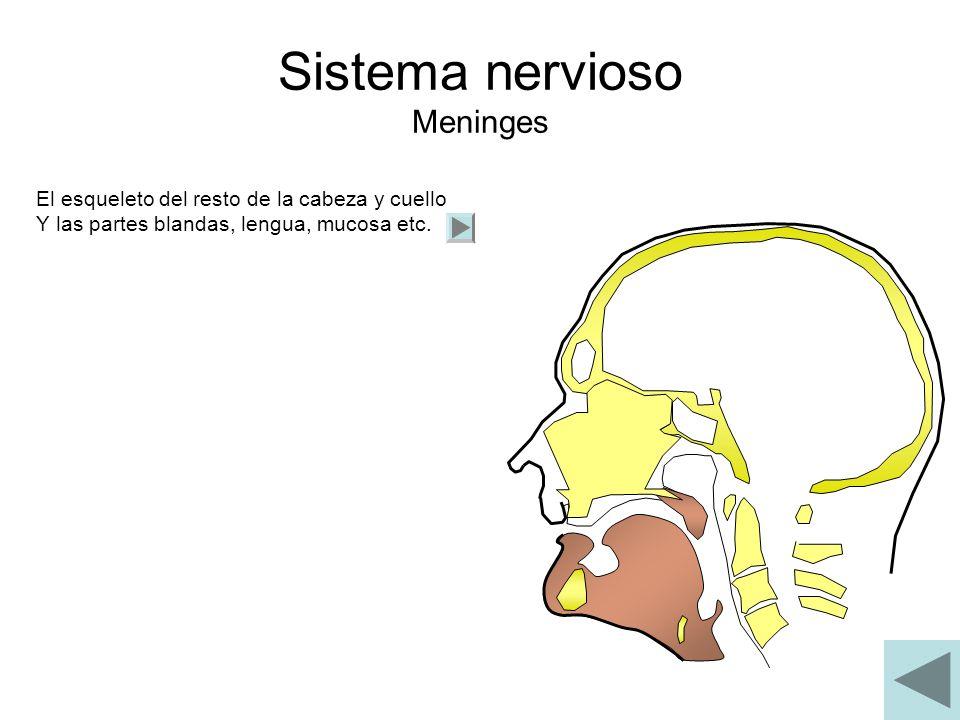 Sistema nervioso Meninges