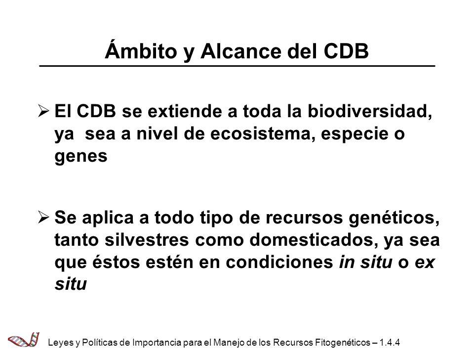 Ámbito y Alcance del CDB
