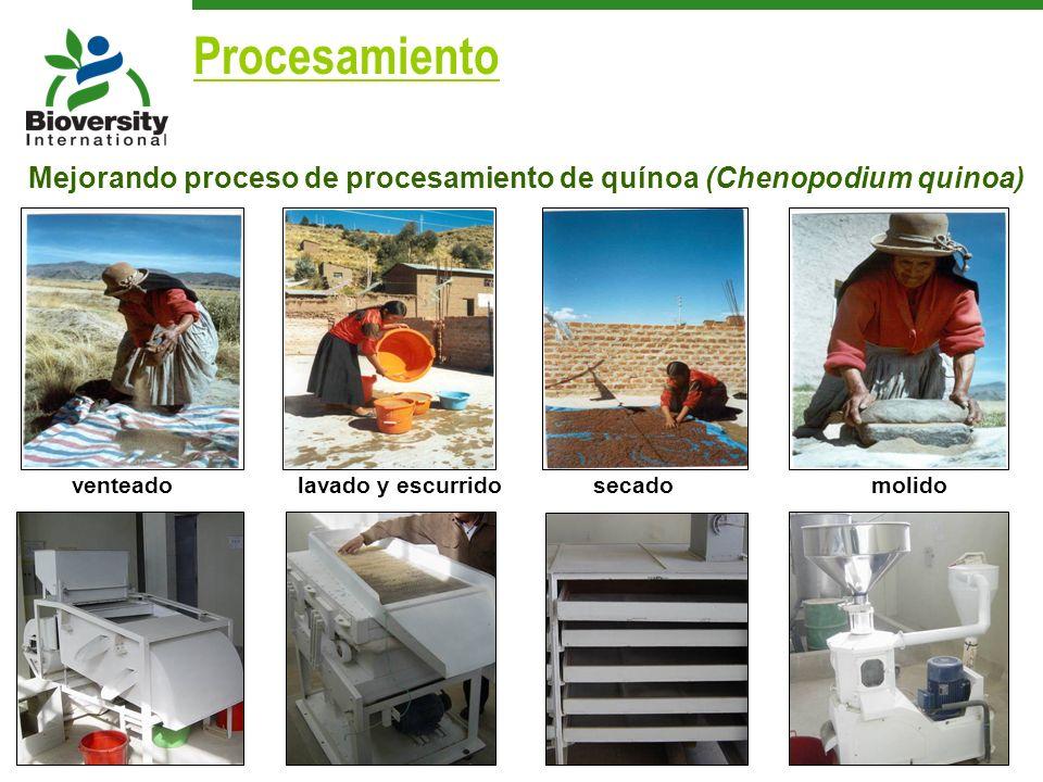 Procesamiento Mejorando proceso de procesamiento de quínoa (Chenopodium quinoa) venteado. lavado y escurrido.