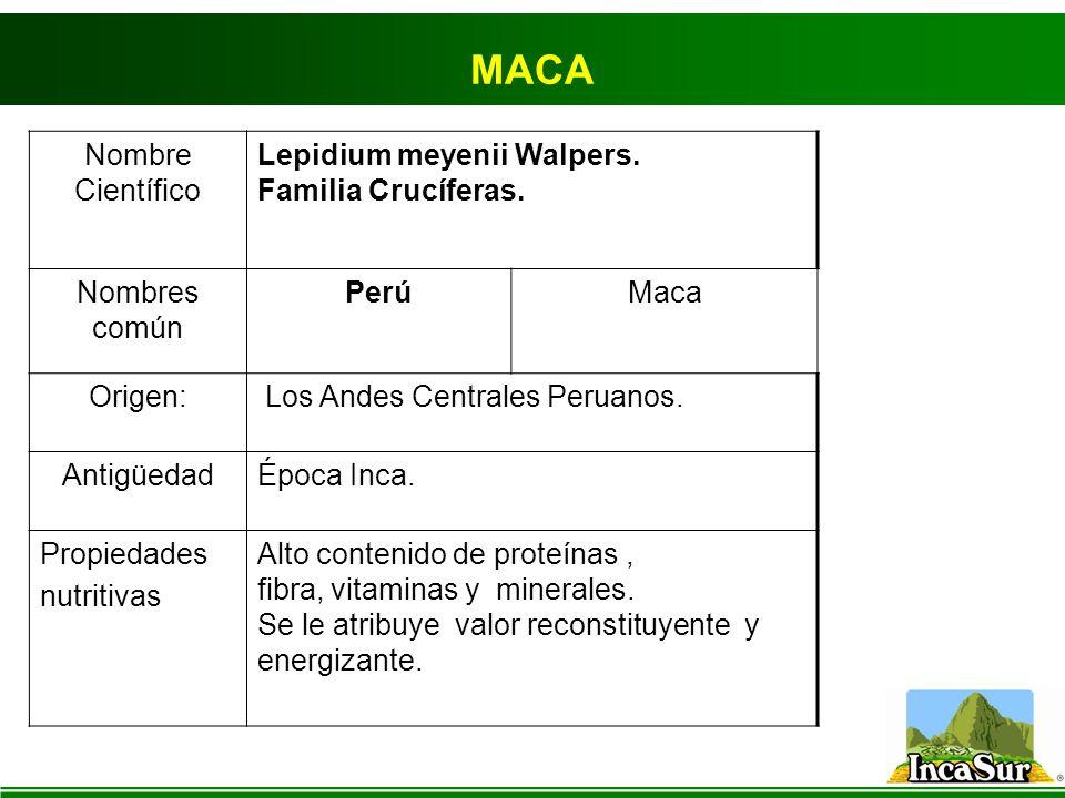MACA Nombre Científico Lepidium meyenii Walpers. Familia Crucíferas.
