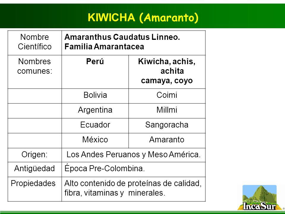 KIWICHA (Amaranto) Nombre Científico Amaranthus Caudatus Linneo.