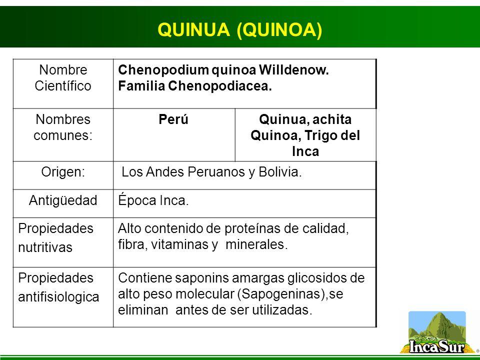QUINUA (QUINOA) Nombre Científico Chenopodium quinoa Willdenow.
