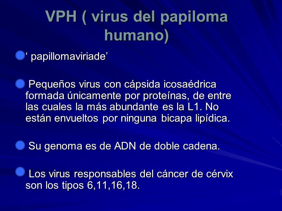 VPH ( virus del papiloma humano)