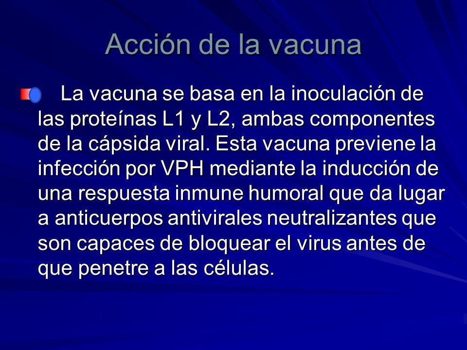 Acción de la vacuna