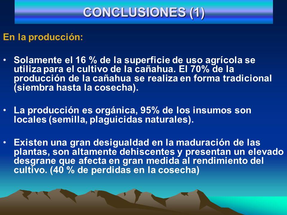 CONCLUSIONES (1) En la producción: