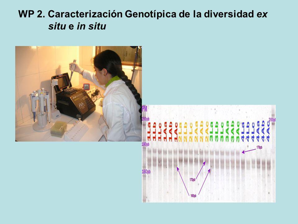 WP 2. Caracterización Genotípica de la diversidad ex situ e in situ
