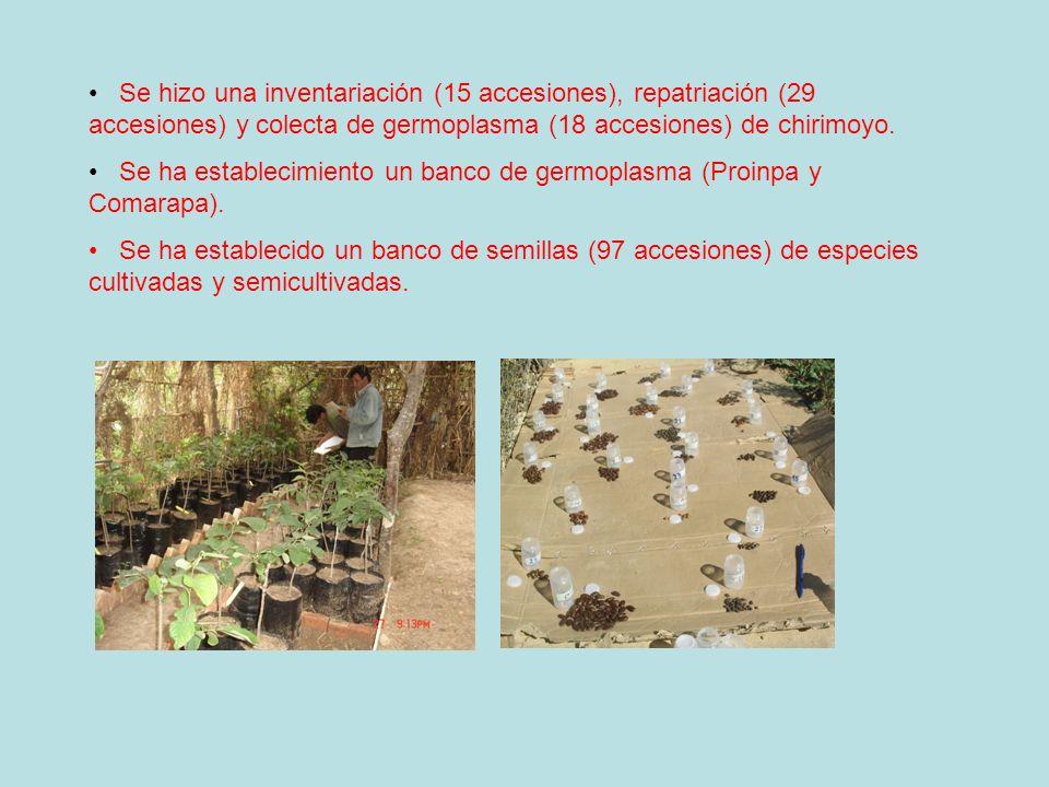 Se hizo una inventariación (15 accesiones), repatriación (29 accesiones) y colecta de germoplasma (18 accesiones) de chirimoyo.