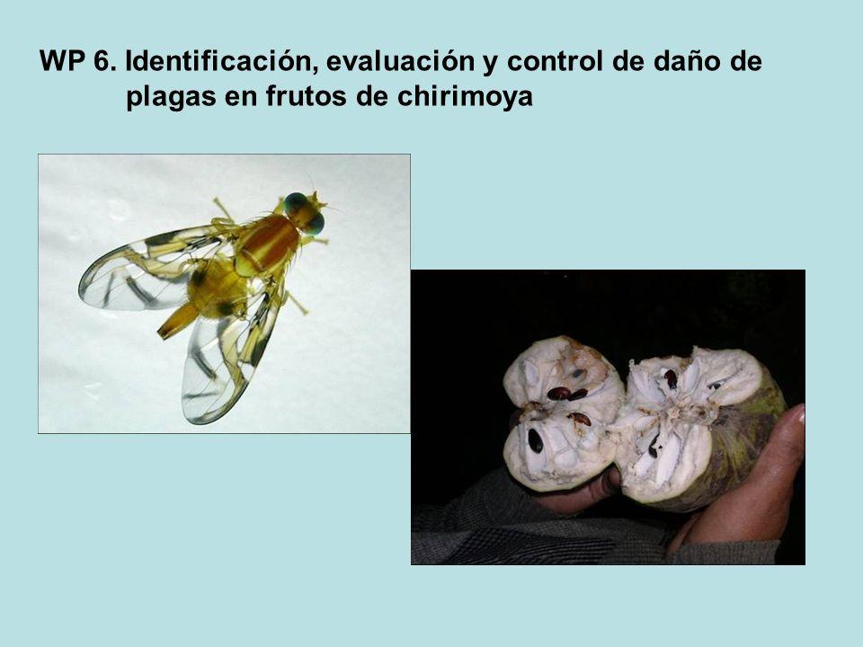 WP 6. Identificación, evaluación y control de daño de