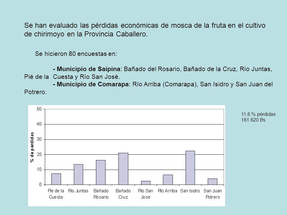 Se han evaluado las pérdidas económicas de mosca de la fruta en el cultivo de chirimoyo en la Provincia Caballero.