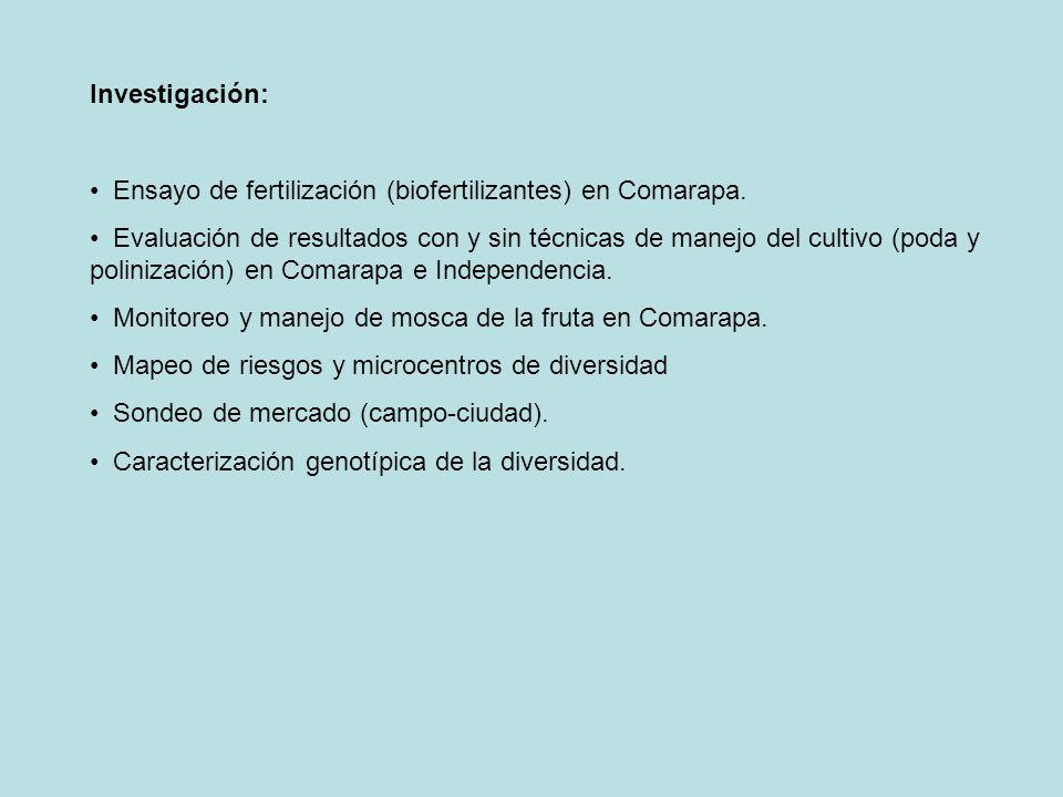 Investigación: Ensayo de fertilización (biofertilizantes) en Comarapa.