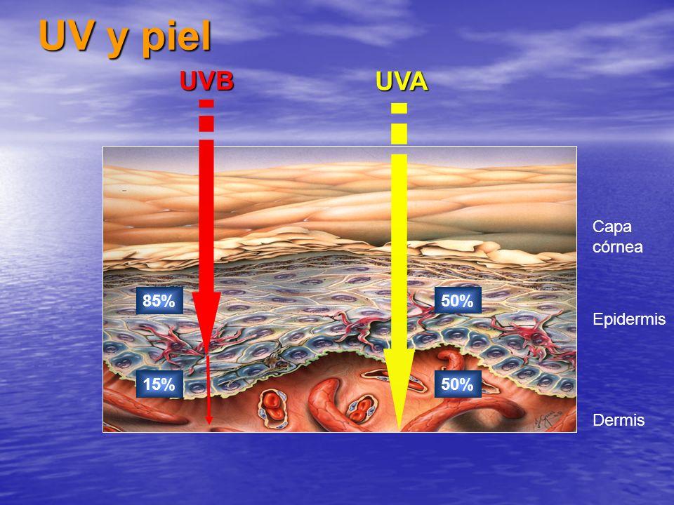 UV y piel UVB UVA Epidermis Capa córnea Dermis 85% 50% 15% 50%