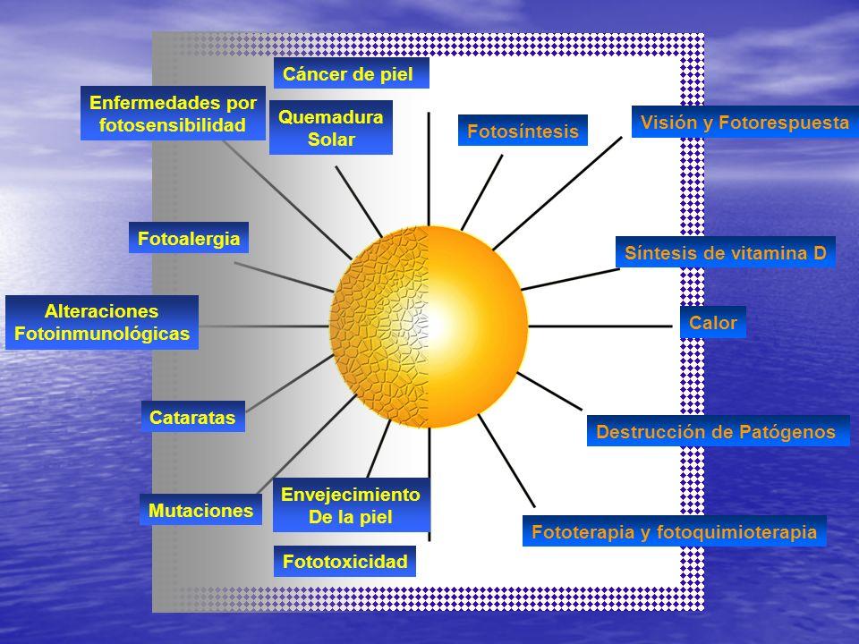 Cáncer de pielEnfermedades por. fotosensibilidad. Quemadura. Solar. Visión y Fotorespuesta. Fotosíntesis.