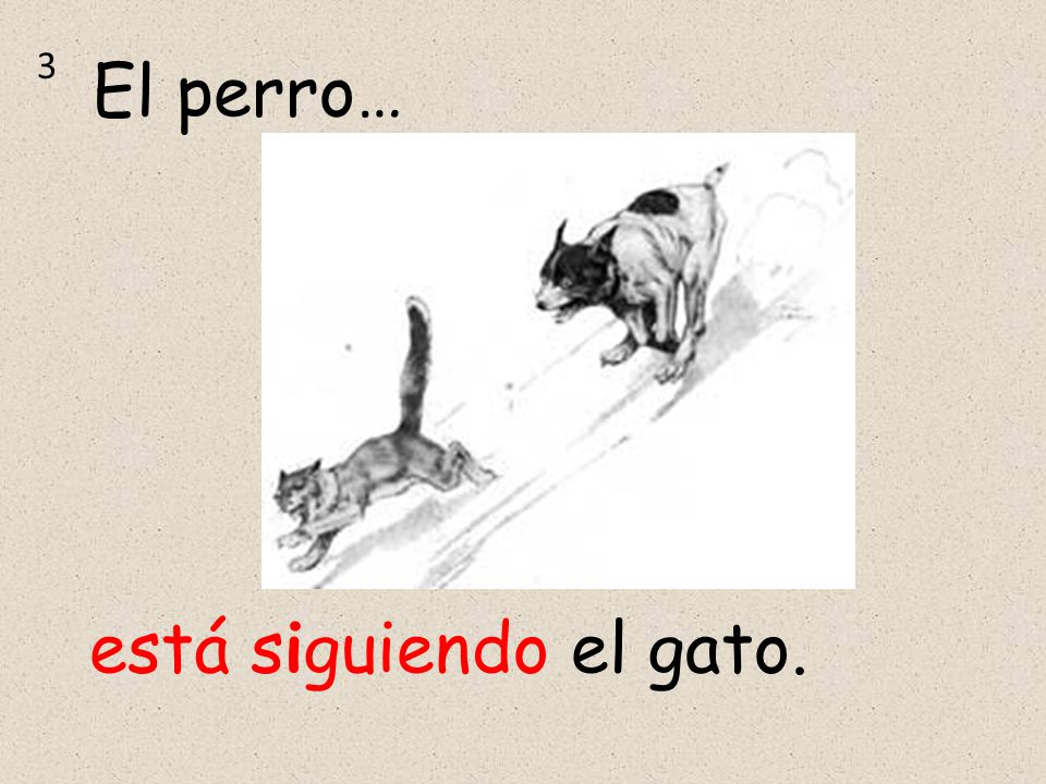 3 El perro… está siguiendo el gato.