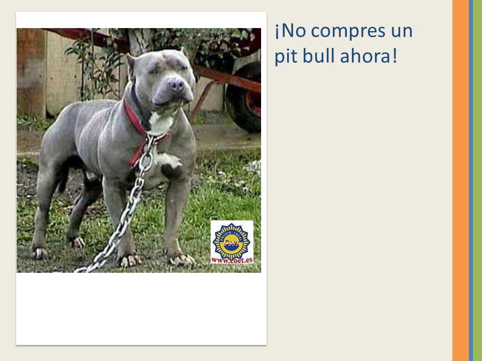 ¡No compres un pit bull ahora!