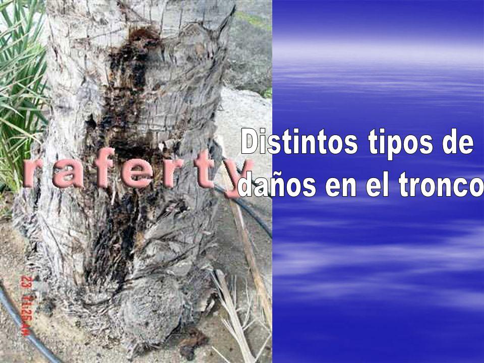 Distintos tipos de daños en el tronco