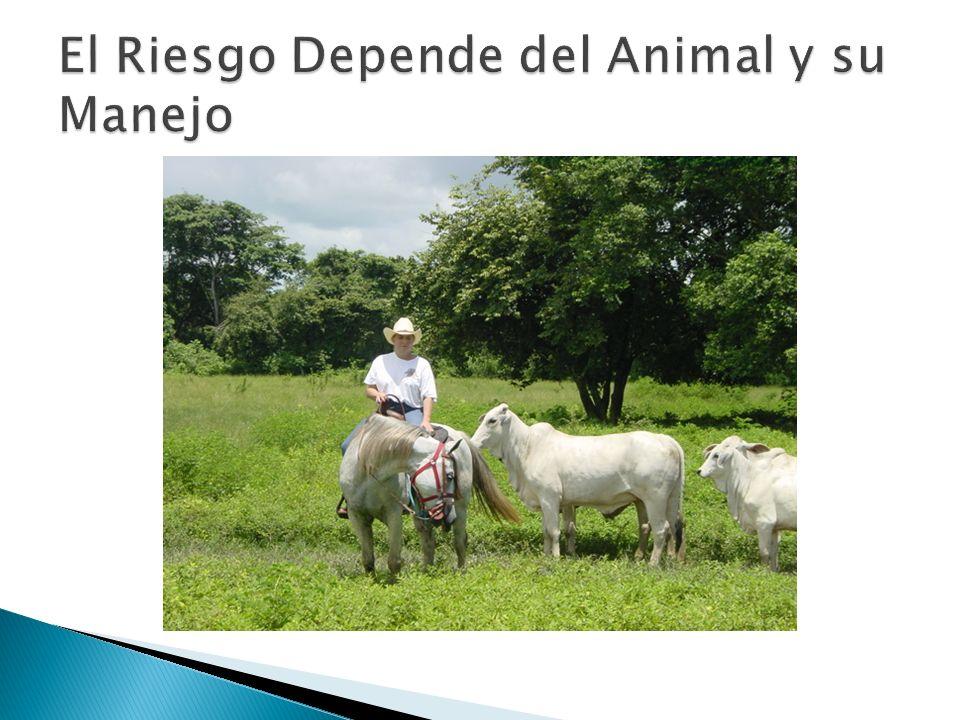 El Riesgo Depende del Animal y su Manejo