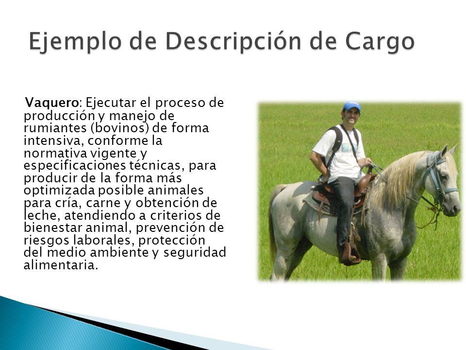 Ejemplo de Descripción de Cargo