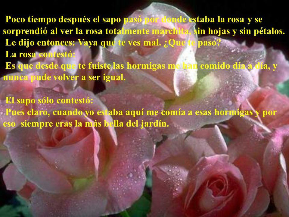 Poco tiempo después el sapo pasó por donde estaba la rosa y se sorprendió al ver la rosa totalmente marchita, sin hojas y sin pétalos.