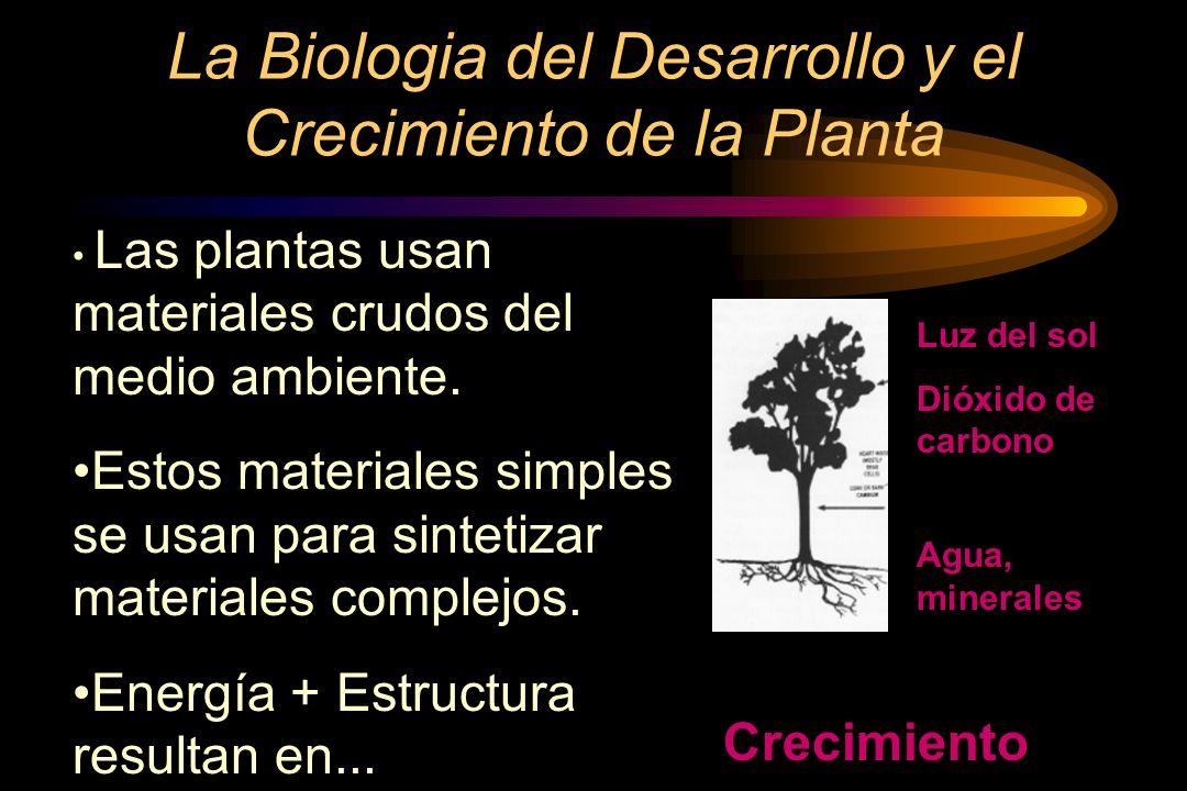La Biologia del Desarrollo y el Crecimiento de la Planta
