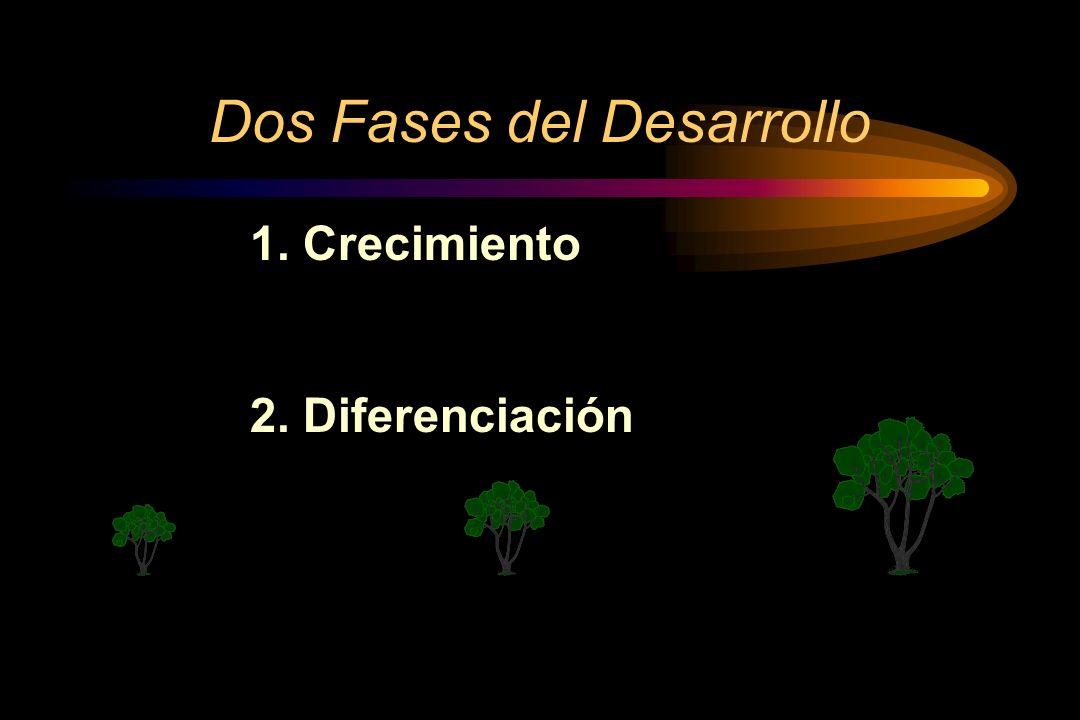 Dos Fases del Desarrollo