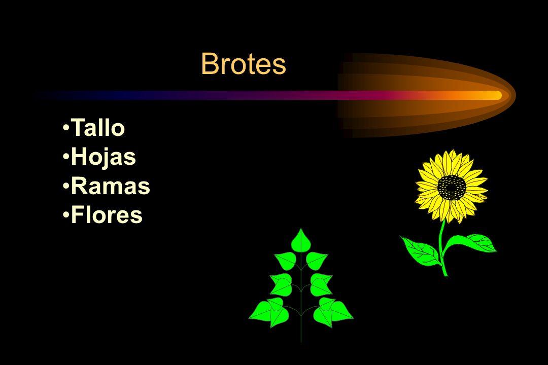 Brotes Tallo Hojas Ramas Flores