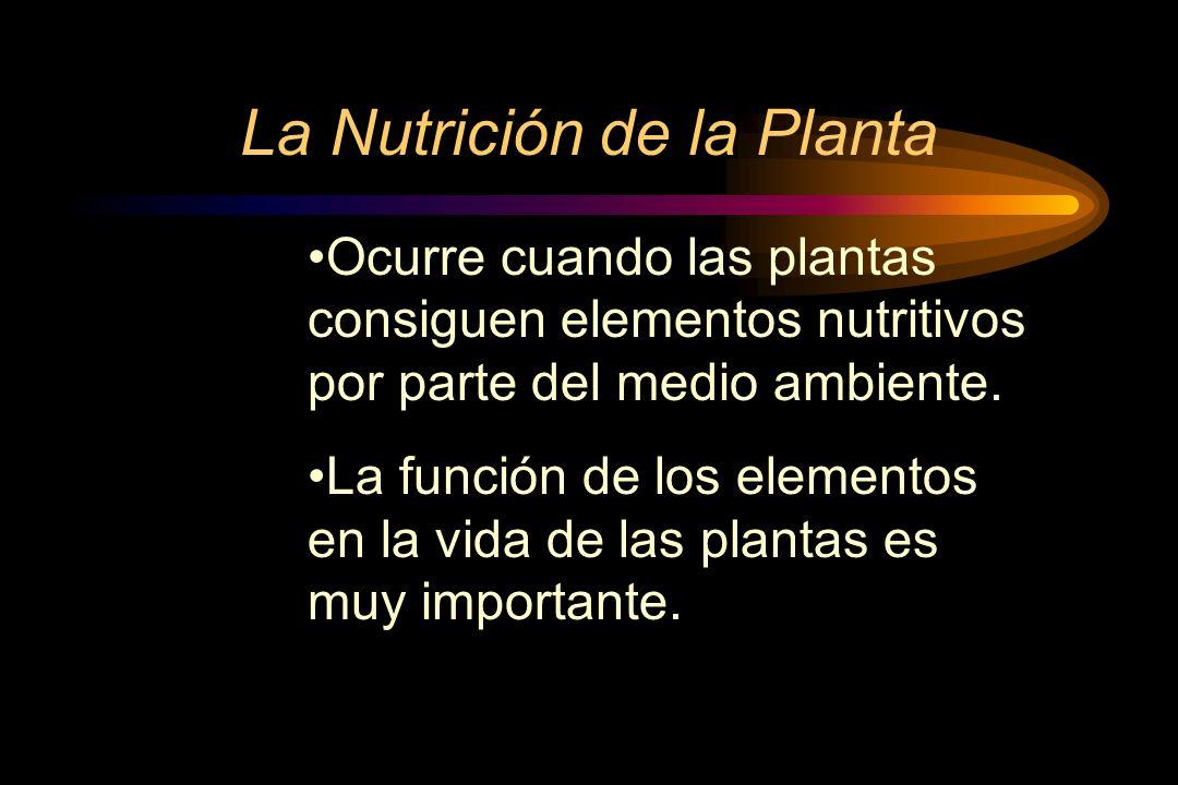 La Nutrición de la Planta