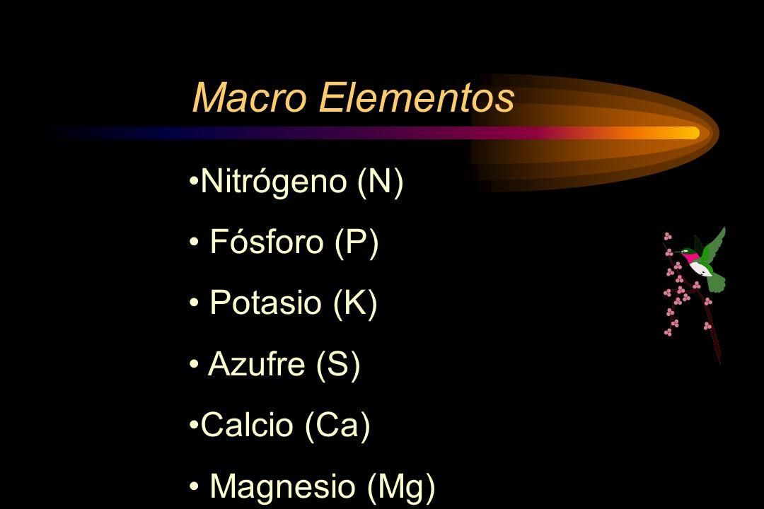 Macro Elementos Nitrógeno (N) Fósforo (P) Potasio (K) Azufre (S)