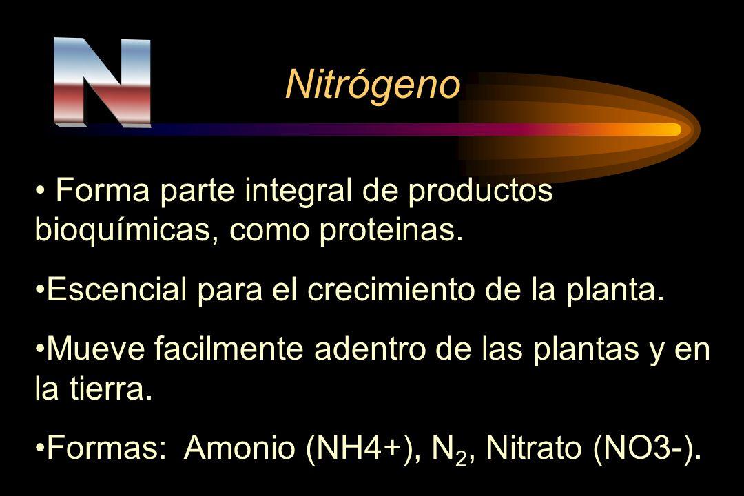 NitrógenoN. Forma parte integral de productos bioquímicas, como proteinas. Escencial para el crecimiento de la planta.