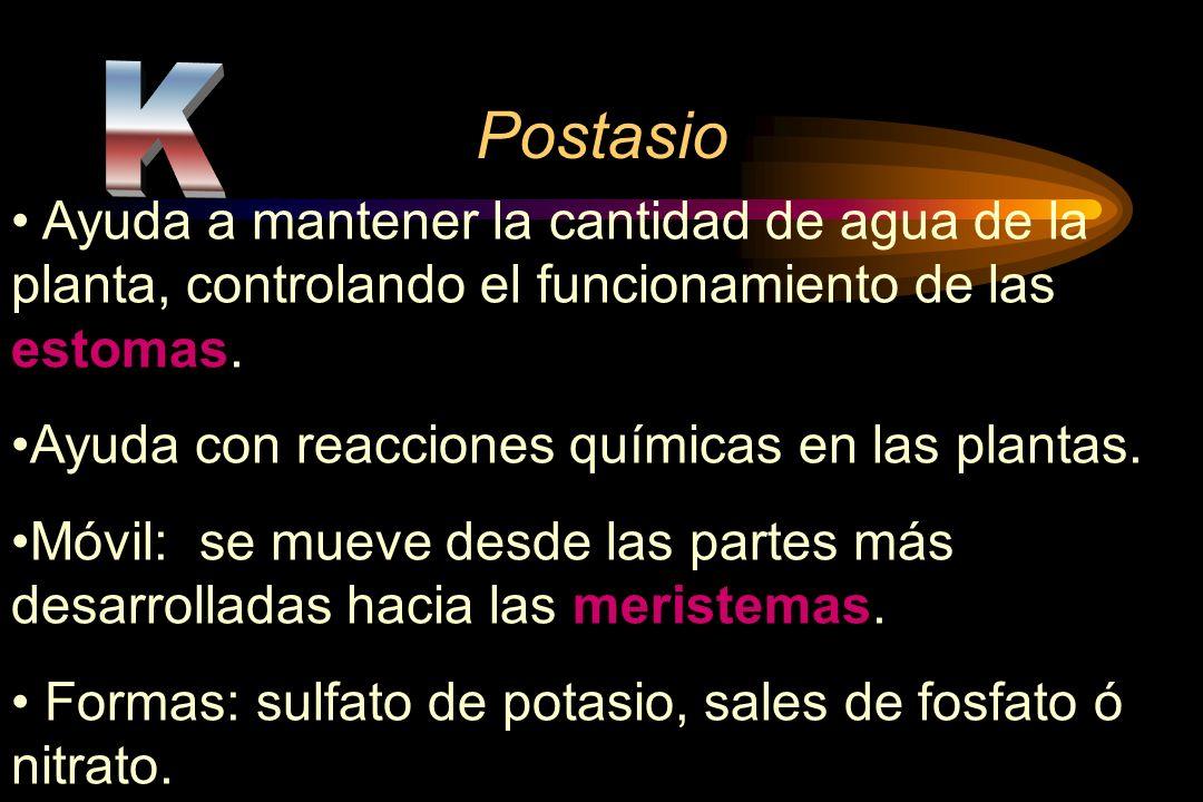 PostasioK. Ayuda a mantener la cantidad de agua de la planta, controlando el funcionamiento de las estomas.